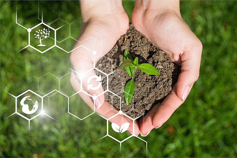 Green sprout in the hands with biochemical structure